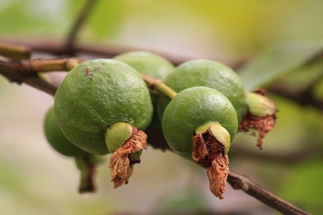 Guavas - Superfoods For Hair Growth