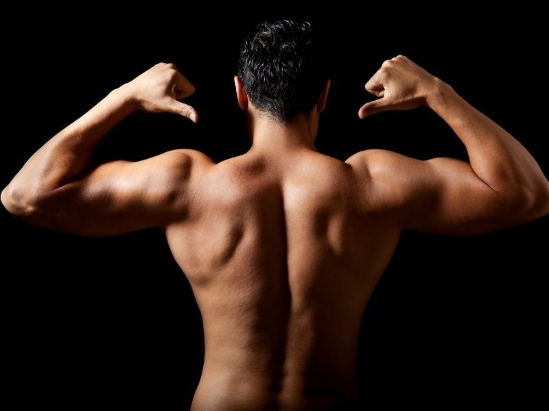 How Important is Nutrition to build arm muscle