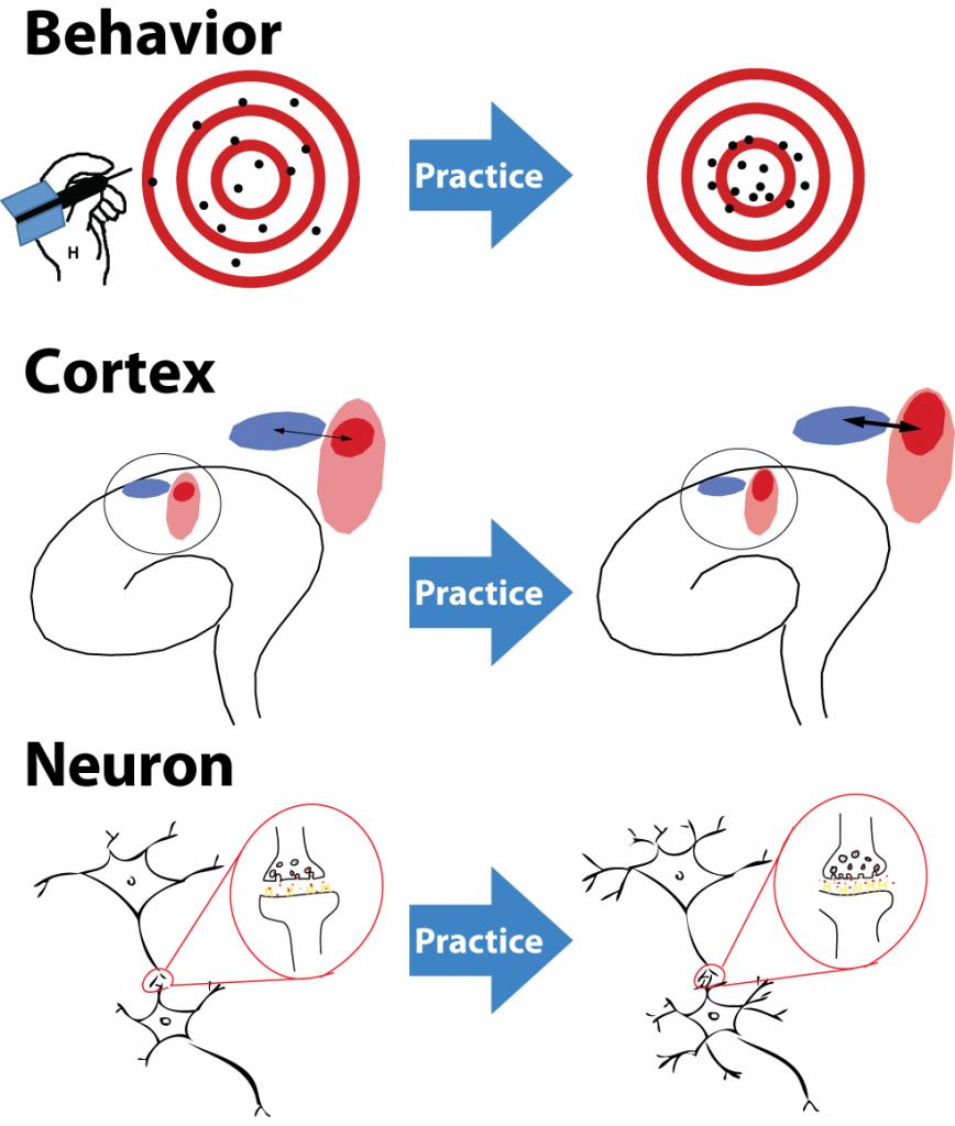 Brain_neuroplasticity_after_practice